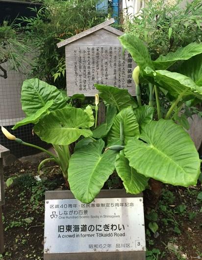 品川-5.jpg