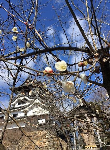 犬山城-4.jpg