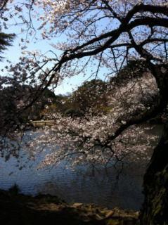 桜-13_01.JPG